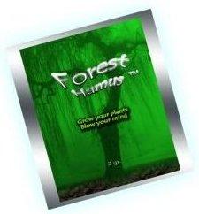 forest-humus-spice-nachfolger.jpg